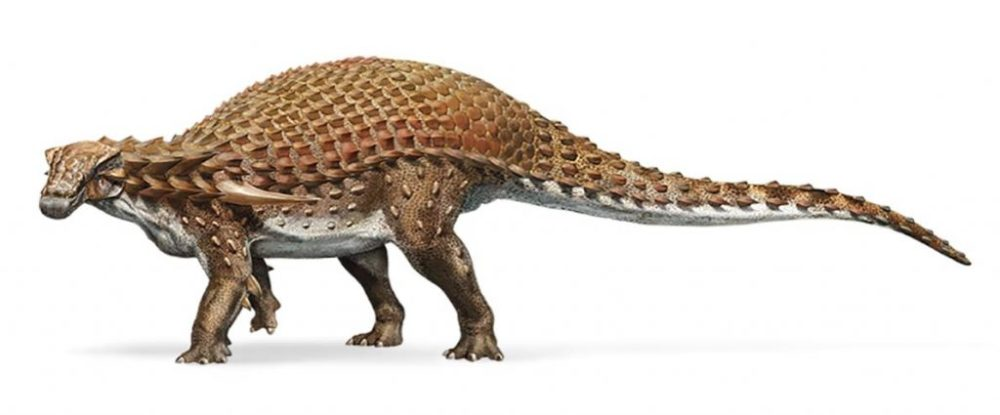 El Nodosaurus es miembro de los ankylosaurios