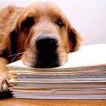 En Estados Unidos, los animales maltratados ya podrán tener un abogado