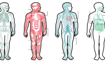 El cuerpo humano (de un varón adulto promedio) tiene unas 125,822 calorías