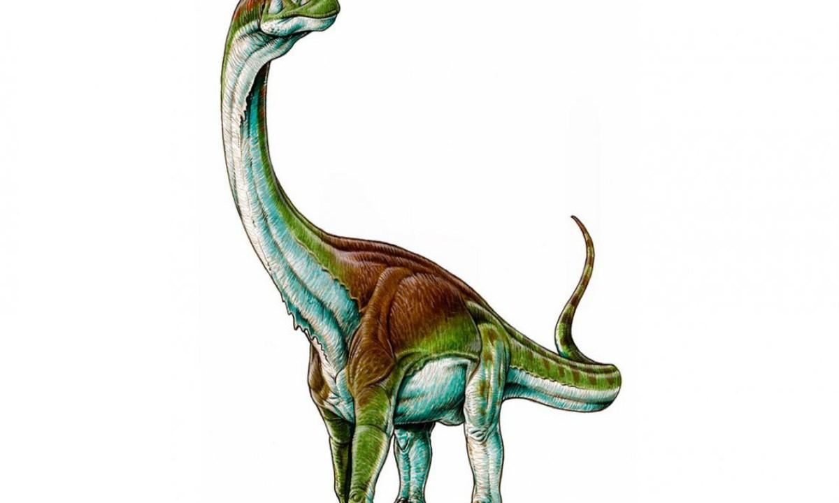 Patagotitán, Argentina, Jurásico, Dinosaurio, Gigante, Paleontólogo