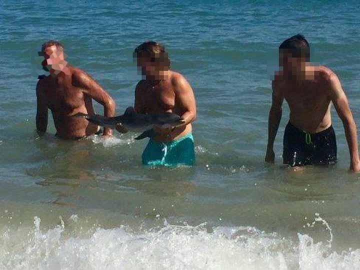 Turistas mataron a una delfín bebé varada en Mojácar