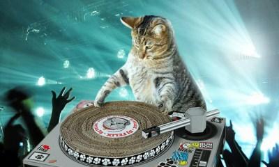 Día Internacional del gato dj cover