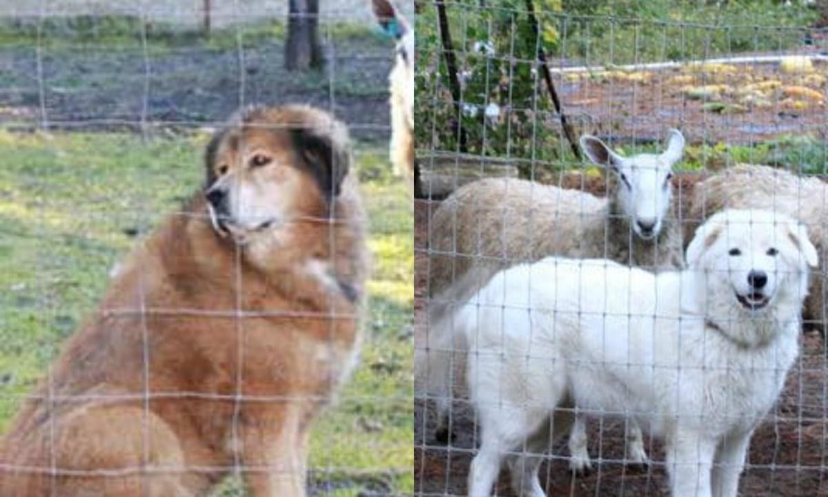 Por demanda vecinal, juez ordena cortar las cuerdas vocales de perros