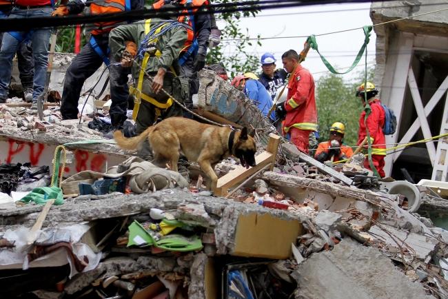 Perro busca víctimas en edificio de Tlalpan