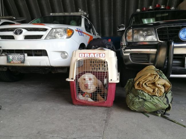 Drago, el perro rescatista de Guatemala