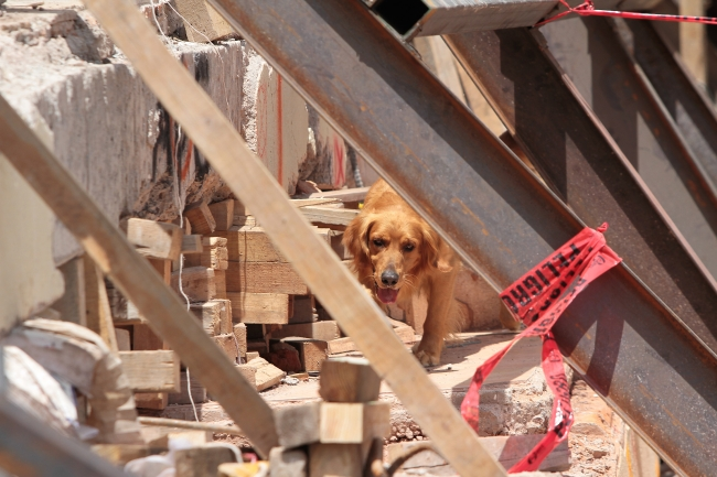 Perro entre los escombros