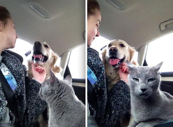 Gatos y perros intentando convivir graciosamente
