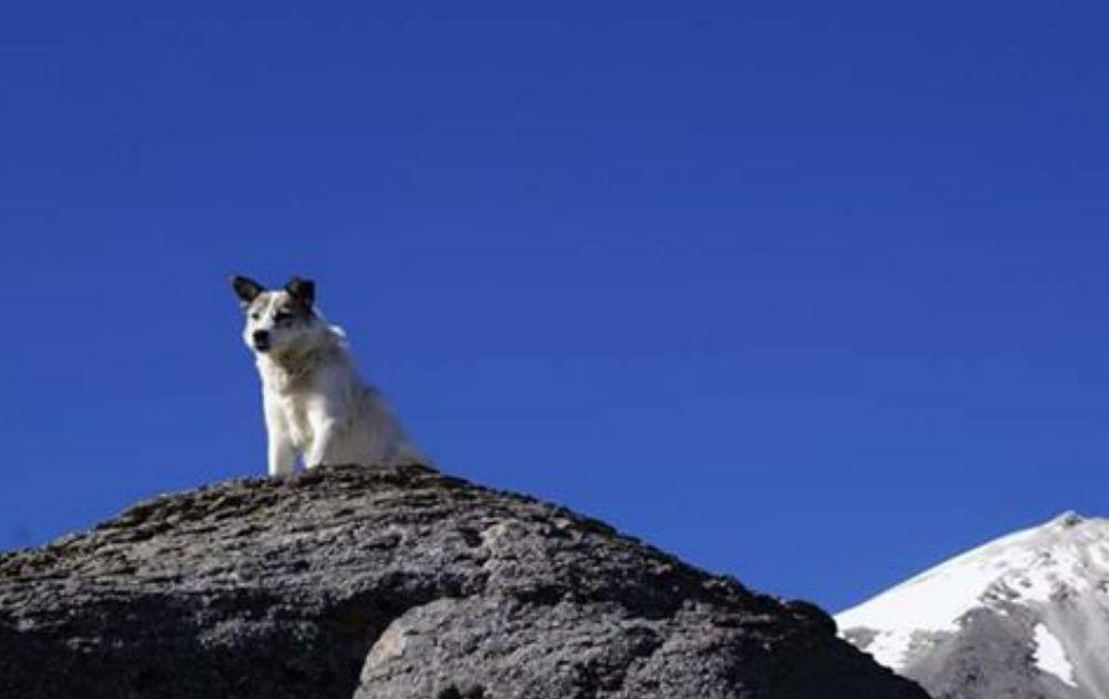 Citla, el Ángel Guardian de la Montaña, Pico de Orizaba