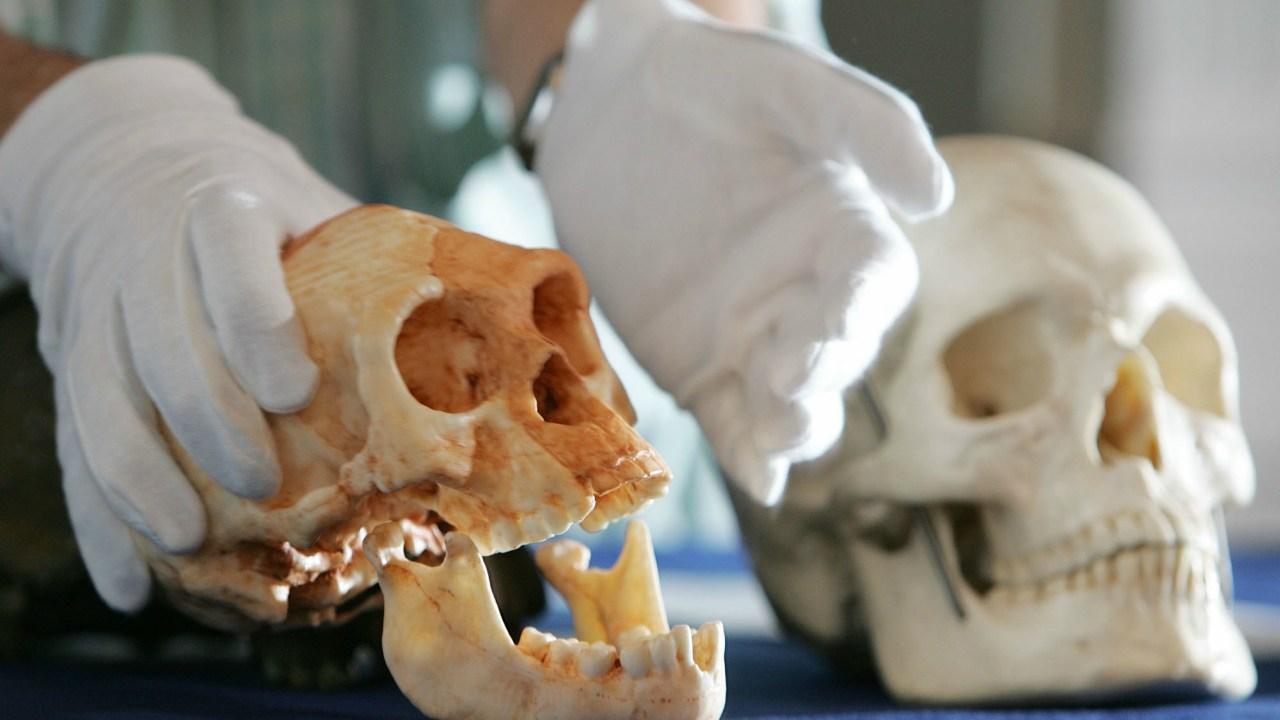 Homo Sapiens, Evolución Humana, Fósiles, África, UNAM, Hombre