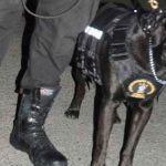 Manolo, el otro perro rescatista