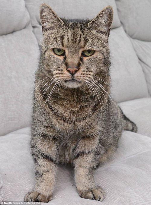 Nutmeg el gato murió a los 32 años de edad