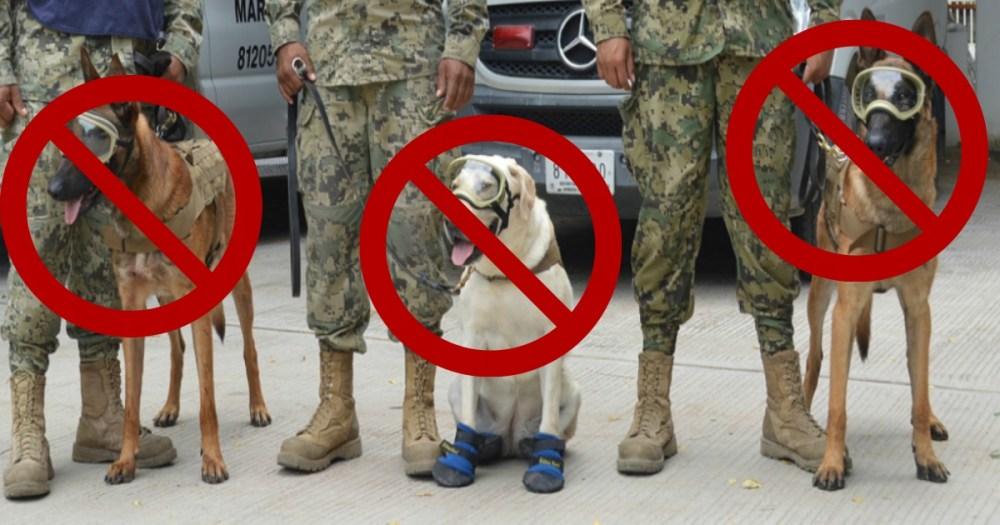 Asociación Protectora de Animales, Unidad Animal, Perros, Rescatista, Brigadistas, Binomios