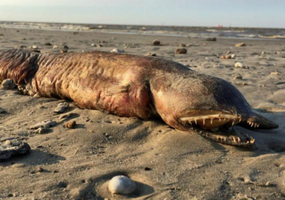 Huracán Harvey, Monstruo, Playa, Texas, Anguila, Twitter
