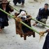 Pueblo chino venera a los perros como dioses