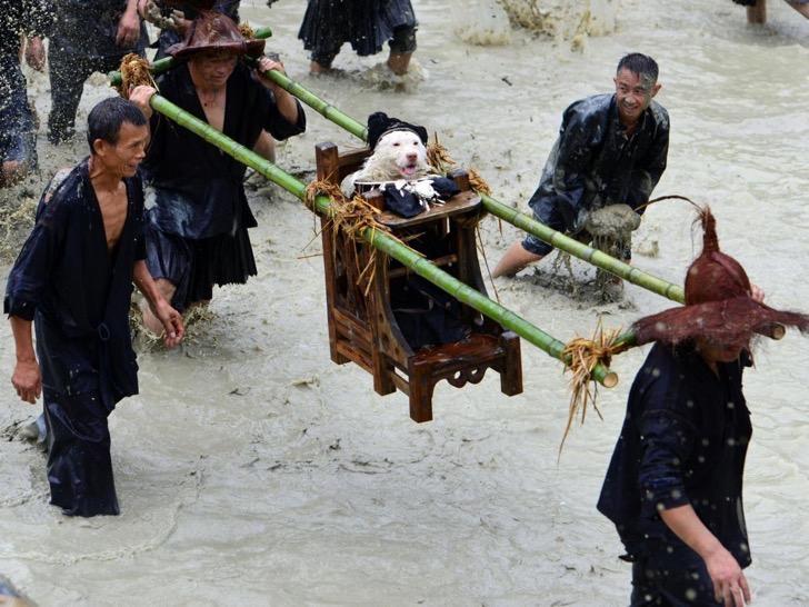 China y el pueblo donde no sólo se comen a los perros
