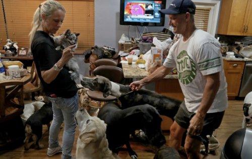 Huracán Irma, Animalitos, Gatos, Perros, Mascotas, Refugio