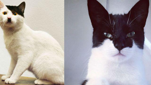 Gato Hitler vs Batcat