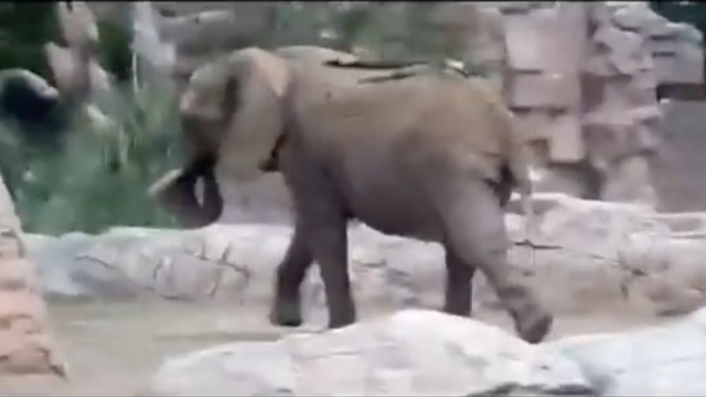 Zoológico, Reacciones Video, Animales, Sismo, 19s, Elefante