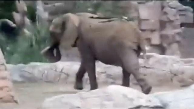 Zoológico, Reacciones Video, Animales, Sismo, 19s, Elefante
