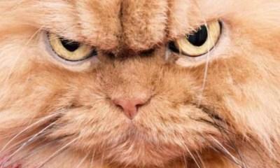 Gatito, Gatos, Esterilización, Reacción, Video, Viral