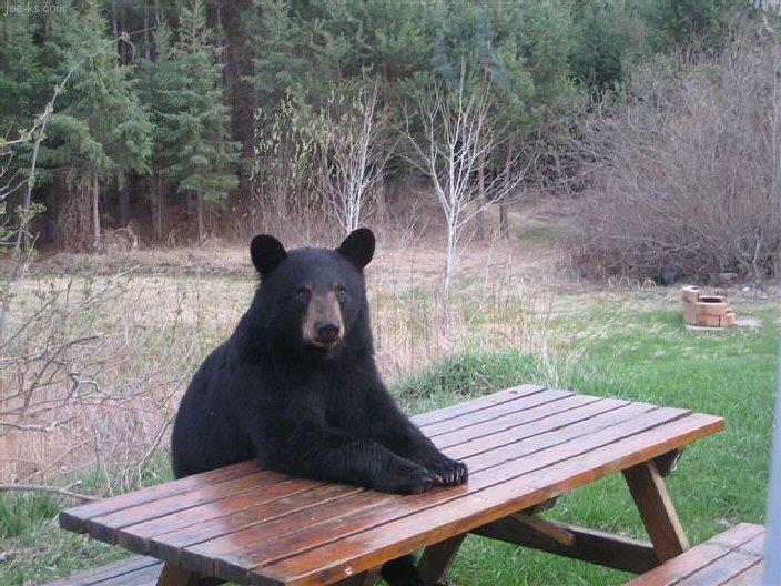 Una mamá oso y sus dos ositos entraron a cenar a una pizzería