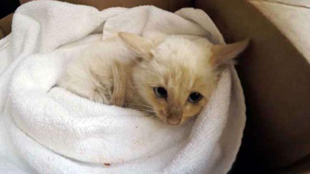 VIDEO: Logran revivir a un gato que había quedado congelado