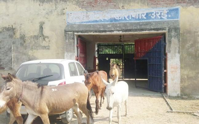 Manada de burros saliendo de prisión
