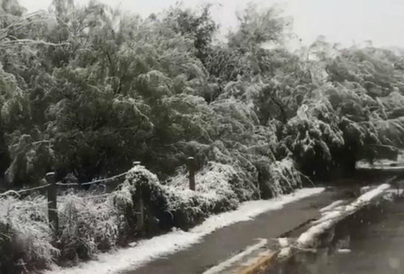 Coahuila se pintan de blanco por caída de nieve