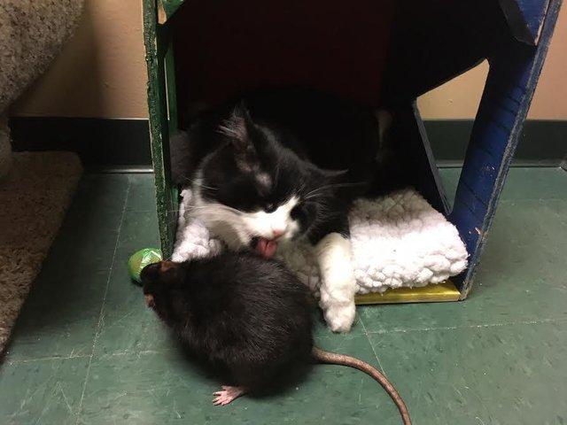 gato-rata-amigos-2