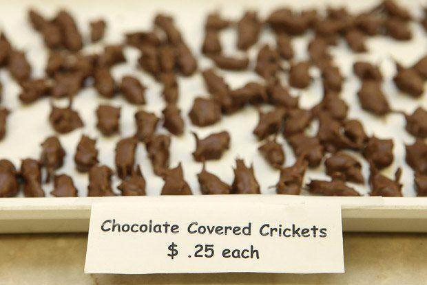 Grillos cubiertos de chocolate