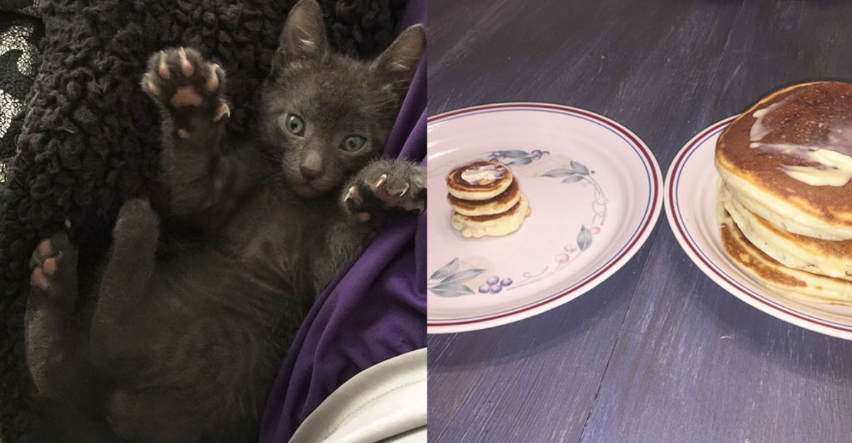 Gatito-hotcakes-miniatura