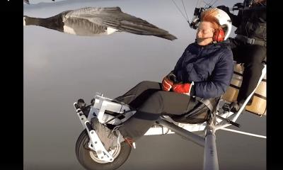 aves-pajaros-volar