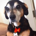 salma-hayek-despide-perrita-perra-lupe-instagram