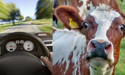 accidentes-automovilisticos