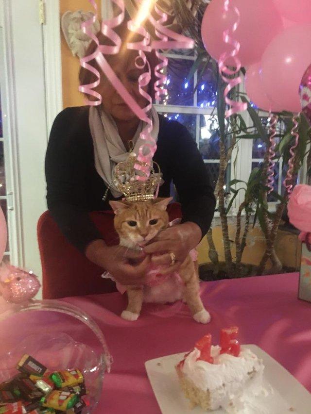 A esta gata le celebraron su quinceañera