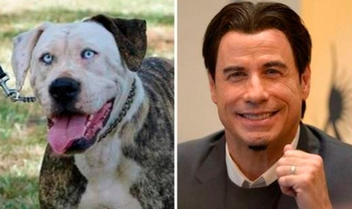 Boof el perro que se parece a John Travolta