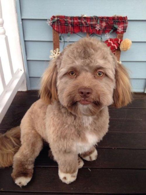 perro cara humano