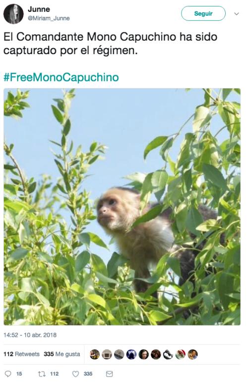 El-mono-capuchino-prófugo-es-capturado-9