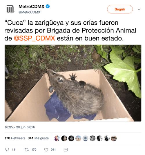 Tweet-Zarigueya