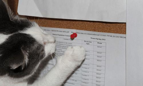 gatitos-haciendo-travesuras-1B