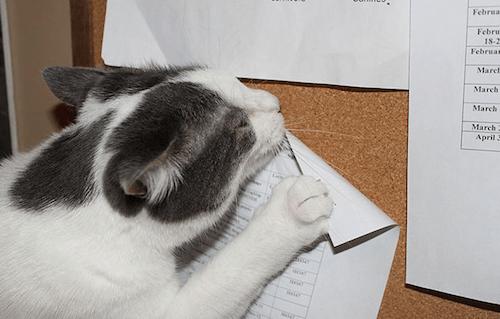 gatitos-haciendo-travesuras-1C