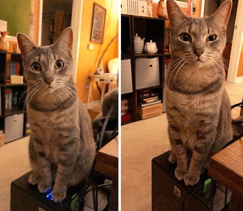 gatitos-haciendo-travesuras-3