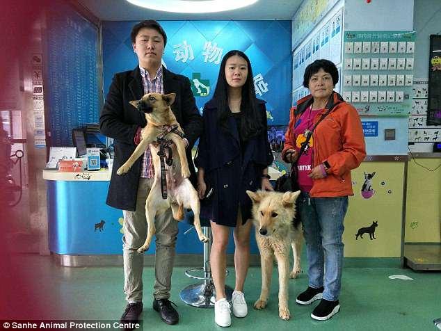 perrito-recien-rescatado-matadero-llora-alegria-china