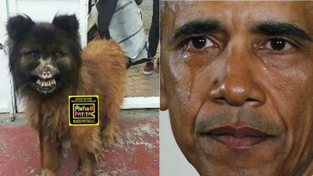 triste-historia-chilaquil-perro-quemaron-acido-mexico
