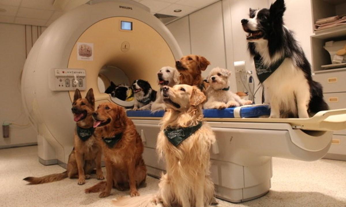 Perros entender humanos mejor comandos habla pensabamos
