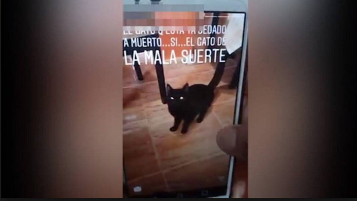 Detienen Joven sube video Gato Lavadora