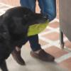 Perrito que paga su propia comida conmueve las redes sociales