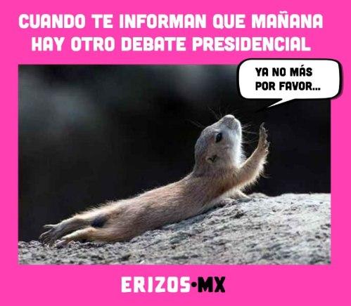 Erizos.mx
