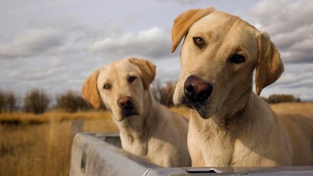 Curiosidades sobre los perritos que probablemente no conoces