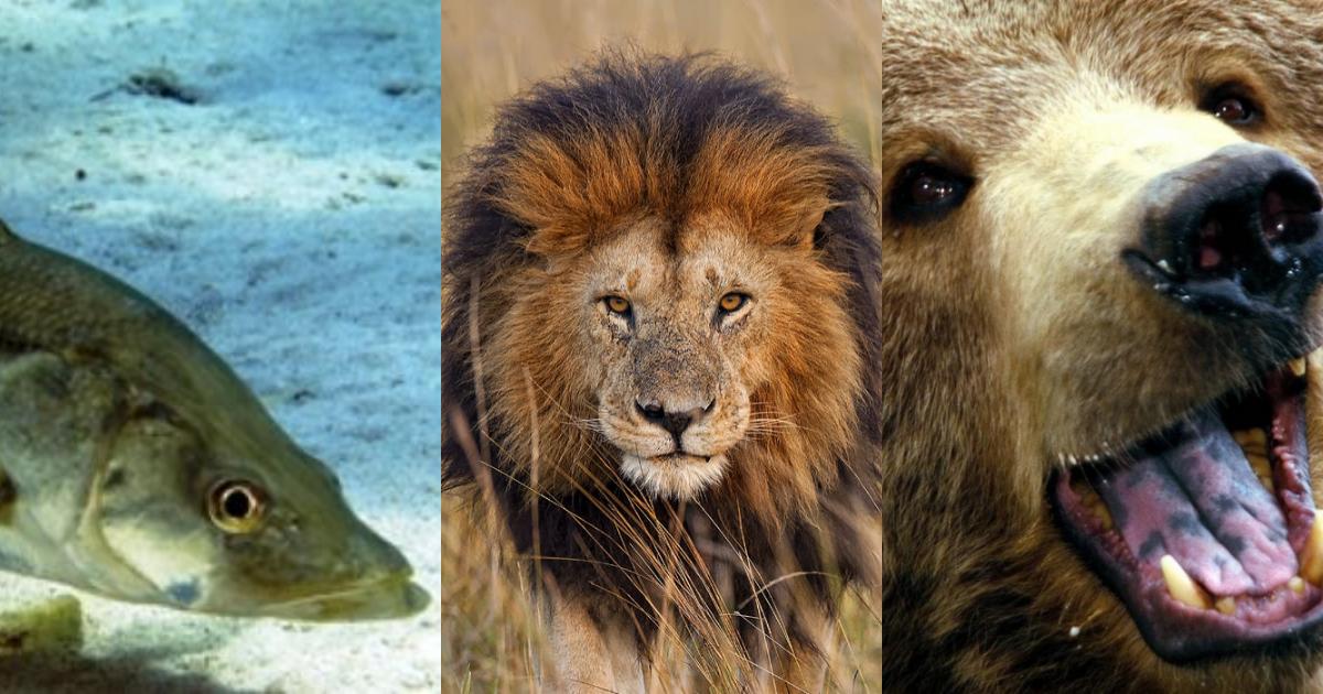Estos son 5 de los peores padres del mundo natural